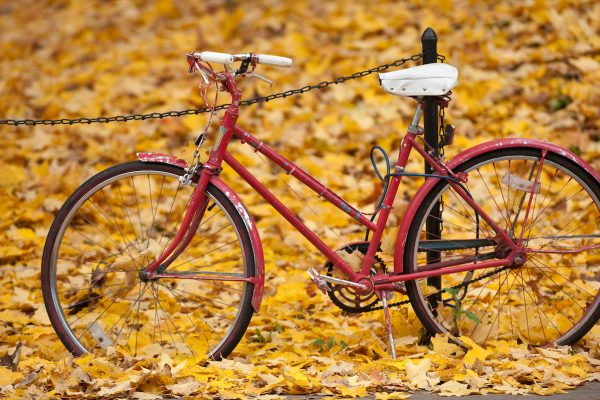 The leaf-covered ground in Library Mall at the University of Wisconsin-Madison provides a golden backdrop for a red-painted bicycle parked along a walkway during autumn on Oct. 28, 2009. Red Bikes Project is a community-based service sponsored by Budget Bicycle Center on Regent Street and licensed through the city of Madison. Similar to borrowing a library book, users can check out and make use of a Red Bike and lock at no charge. ©UW-Madison University Communications 608/262-0067 Photo by: Jeff Miller Date: 10/09 File#: NIKON D3 digital frame 5602